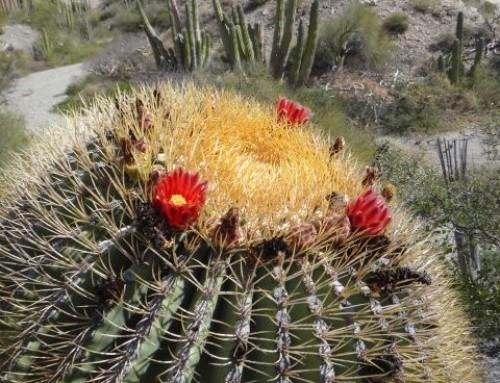 Baja's amazing botany