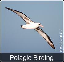 bw-hotbtn-birding