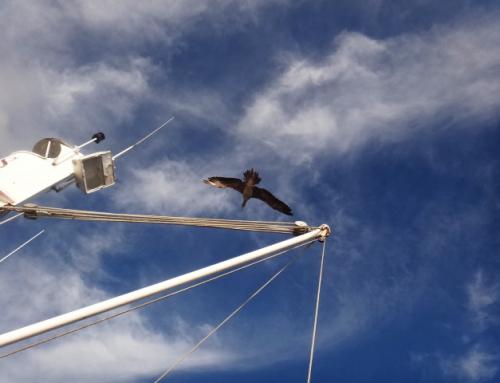 Mexico Pelagic Birding Tour Photo Album-Nov 29-Dec 8, 2015