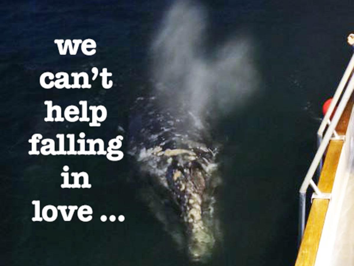 Searcher Natural History Tours – Baja Love Stories!