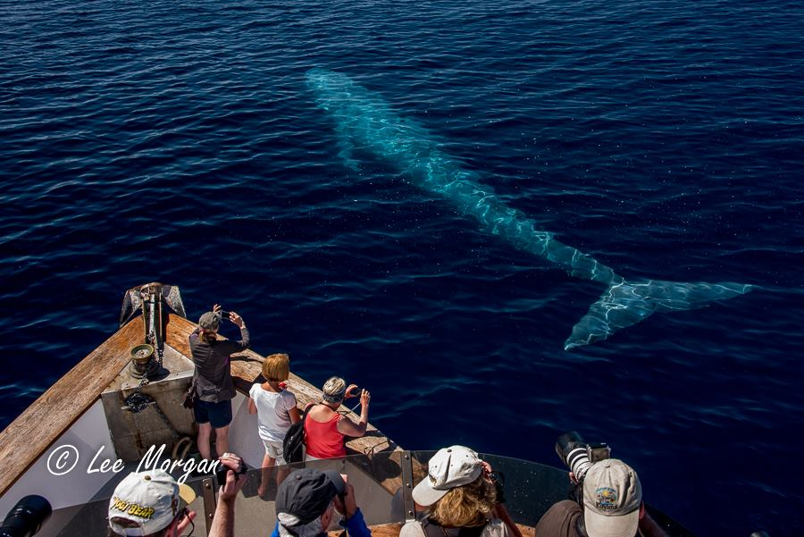 2016 Memories: The Blue Whale Visit