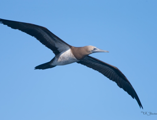 Pelagic Birding Tour, day 4