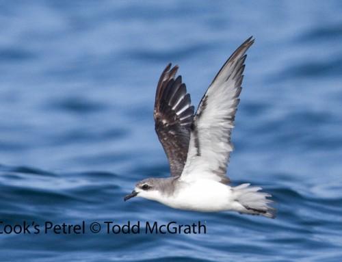 2019 Pelagic Birding Tour (September 2-6)