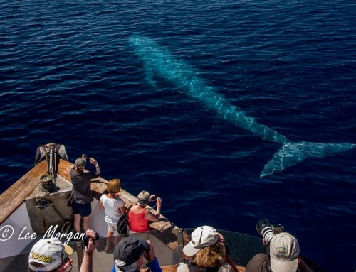 2016 Memories: The Blue Whale Visit