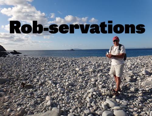 Rob-servations #13: Harbor Seals