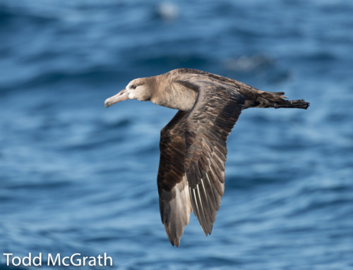 Pelagic Birding Sightings List, 2016