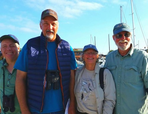 2017 Pelagic Birding Tour Open for Booking!