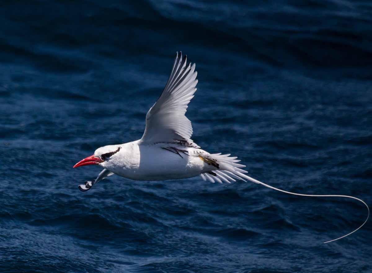 Pelagic Bird Sightings Jul 5-12, 2017