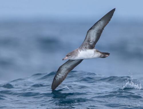 2021 Pelagic Birding Tour-Day 1 report (Sep 6)