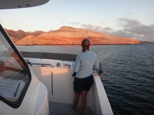 Experience Baja Wildlife with Searcher