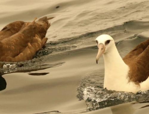 Still Time to Bid for Spot on 5-day Pelagic Birding Tour!