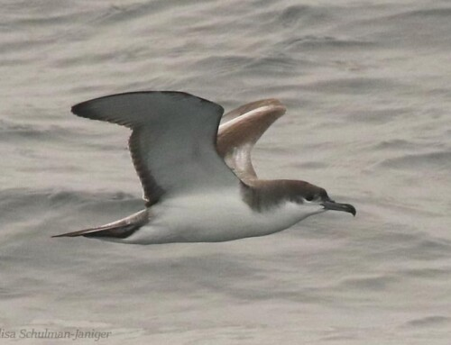 Great Start to 2021 with Offshore Pelagic Sightings!